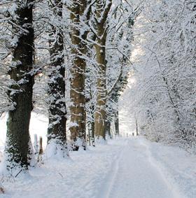 frigul te face să pierzi în greutate pierderea în greutate chilli