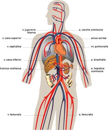 Tromboflebita: Cauze, Simptome & Tratament